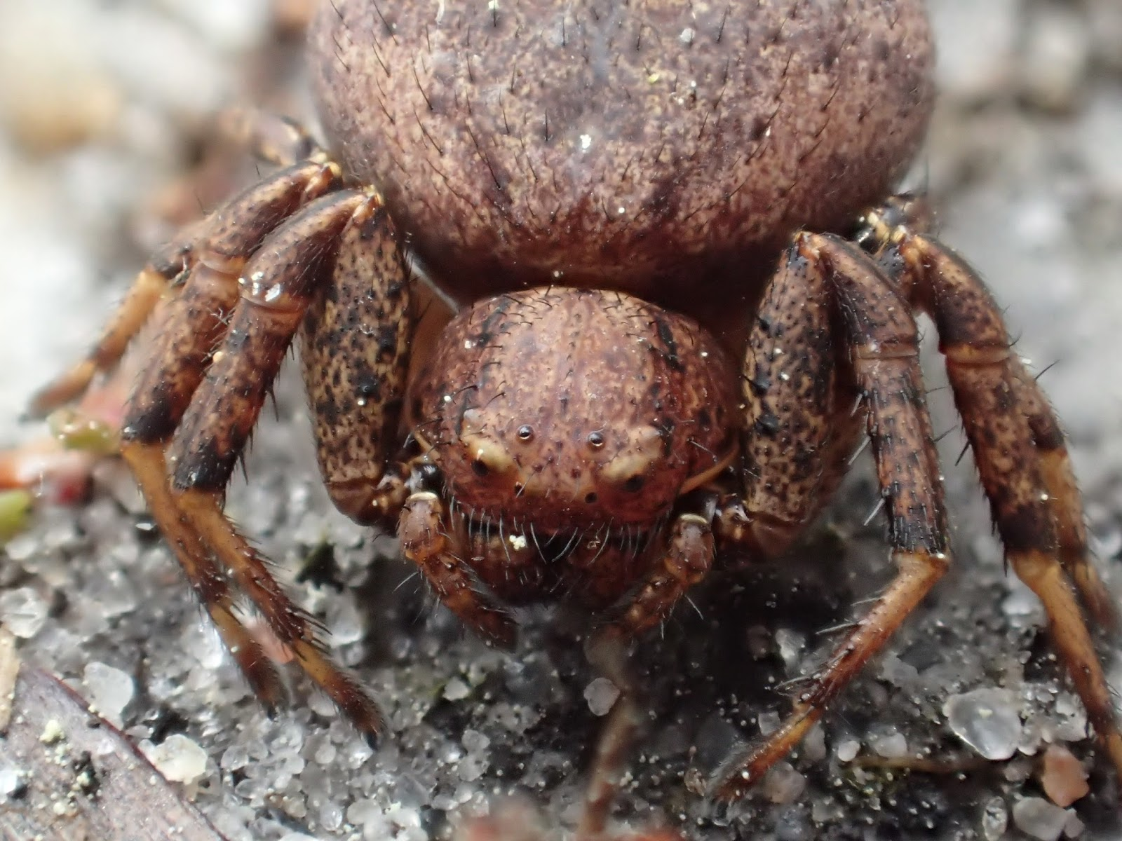 rare spiders of china - HD1600×1200
