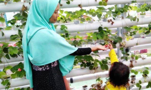 Pertanian Modern Sebagai Solusi Membuka Lapangan Pekerjaan Di Pedesaan