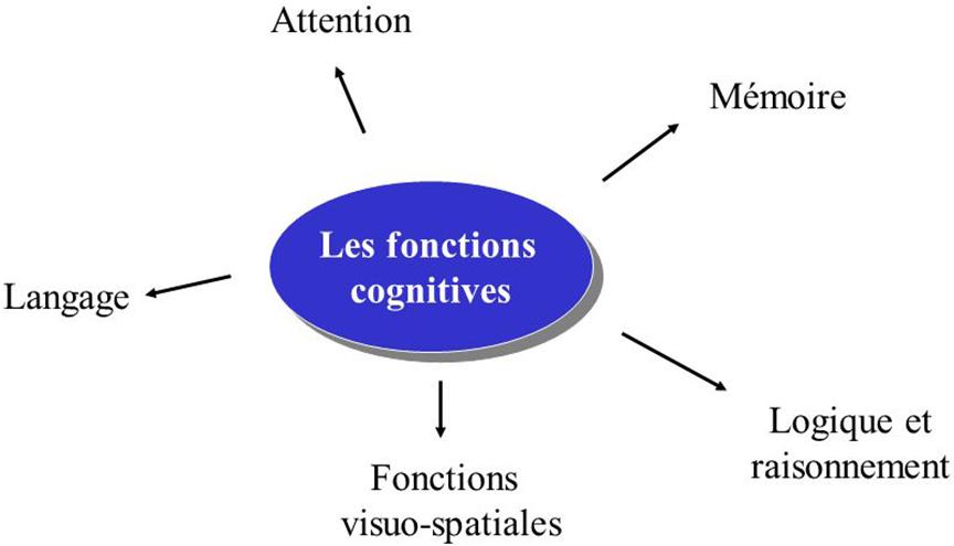 Le cerveau de l 39 enfant et de l 39 adolescent des activit s for Les fonctions logiques