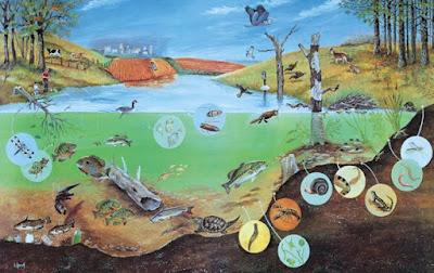 Pengertian, Susunan dan Macam-macam Ekosistem
