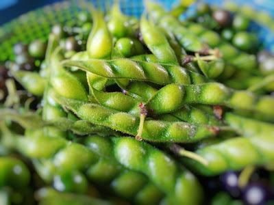 Manfaat Kacang Hiris atau Kacang Gude