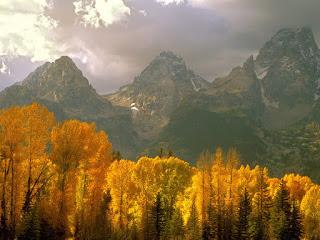 bosque-al-pie-de-las-montañas