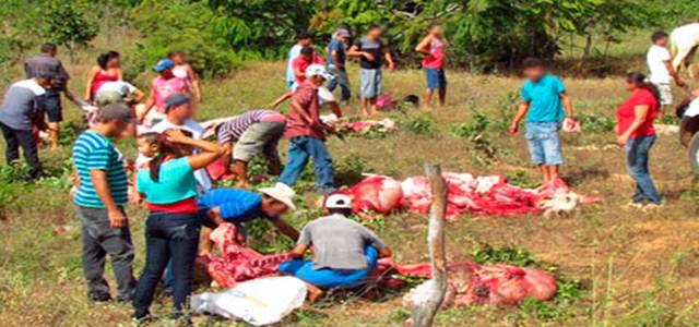 Cristópolis: Moradores retiram carne de animais mortos em acidente na BR 242