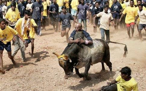 Jallikattu & Bullfighting : Differences - Aish