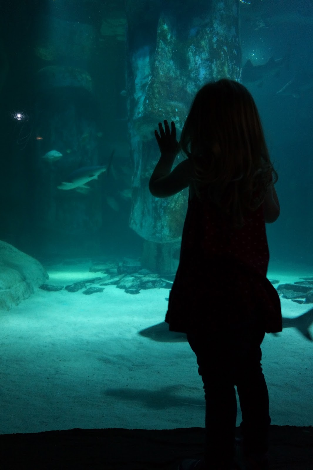 toddler standing in front of the shark tank in london aquarium