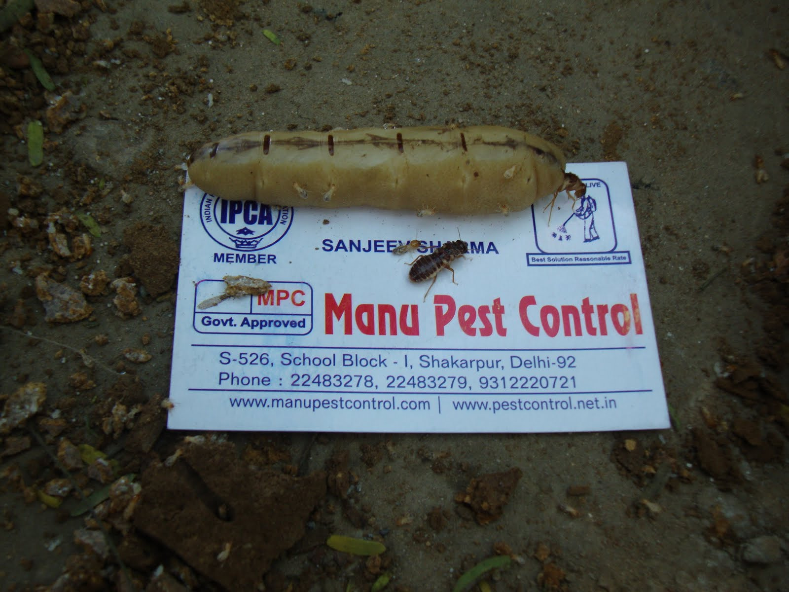 commercial pest control india