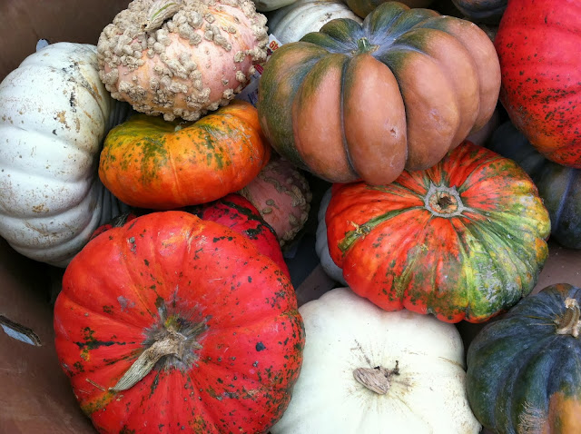 Unusual-Pumpkins-Found-at-Stop-and-Shop