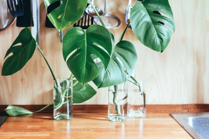 Plantas y tallos en tarros con agua sobre la encimera de la cocina