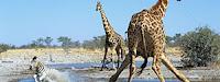 Национален парк Етоша, Намибия
