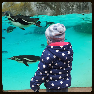 Penguin watching