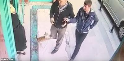 Kucing menyerang pria dan anjing.