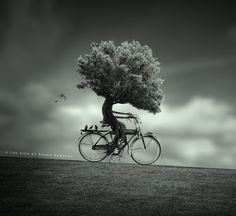 Digital Photography Art