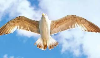 ਪੰਛੀ ਉਡ ਸਕਦੇ ਹਨ ਇਨਸਾਨ ਕਿਉਂ ਨਹੀਂ ? Punjabi Gk