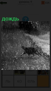 Идет сильный дождь и перебегает дорогу кошка мокрая