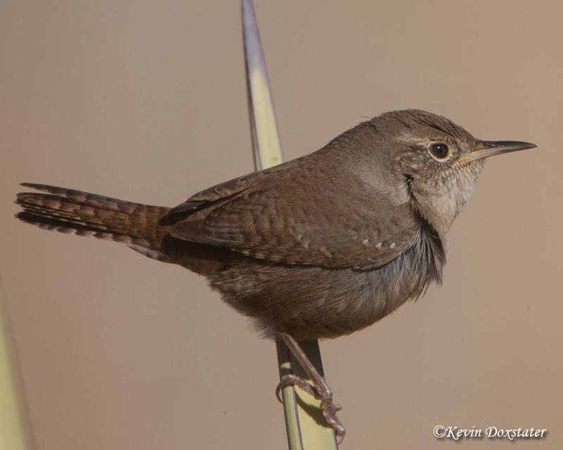 Birding Is Fun!: Fun with Bird Names – The Sequel