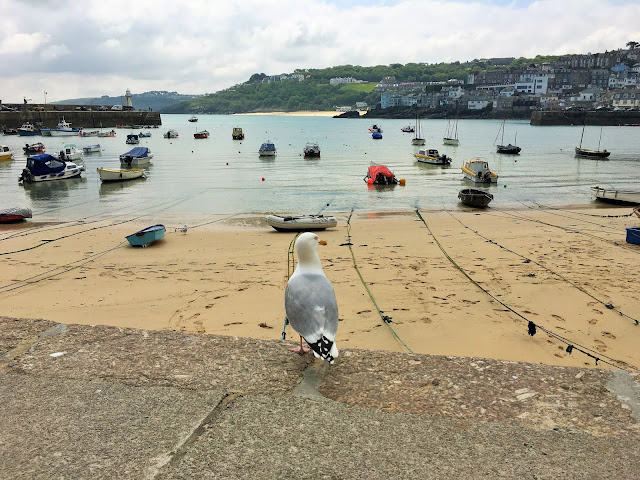 Seagull at St Ives harbour Cornwall