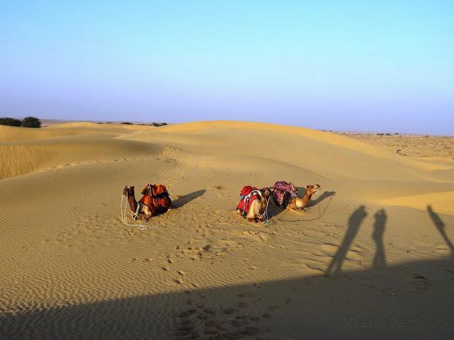 Camels at Sam Sand Dunes  - Jaisalmer, Rajasthan - Pick, Pack, Go