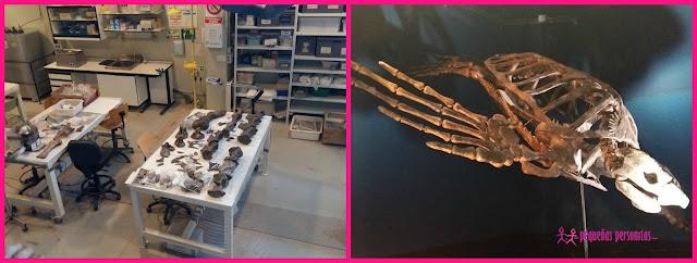 sorteo, dinopolis, planes con niños, dinosaurios, Teruel, arqueologia, excursiones