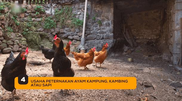 4. Usaha Peternakan Ayam Kampung, Kambing atau Sapi