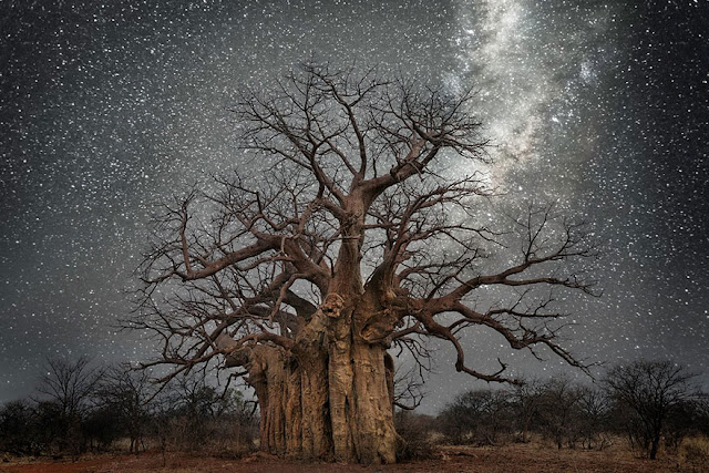 Beth Moon Photographs The World's Oldest Trees Illuminated By Starlight