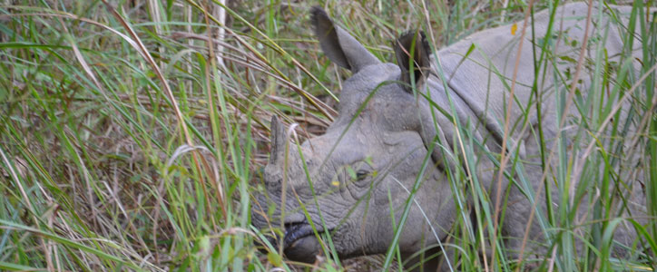 Rhino safari in Chitwan