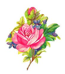 Antique Images: Botanical Art Pink Rose Digital Flower
