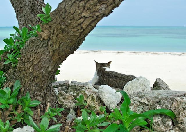 海を眺める猫の写真