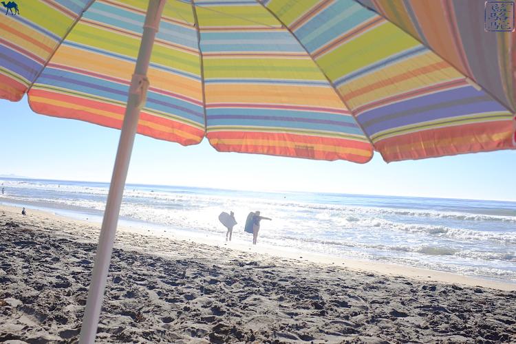 Le Chameau Bleu -  balade à Torrey Pines Beach Californie du Sud USA