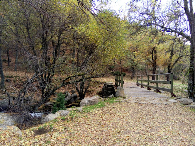 Arroyo-del-aguilon