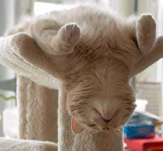 gatito de cabeza
