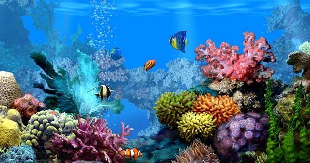Animated Aquarium Wallpaper Bouglle Gallery Free Moving Wallpapers
