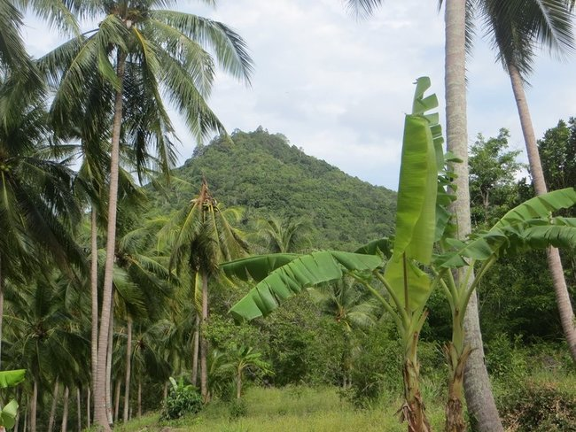 Гора сквозь пальмы