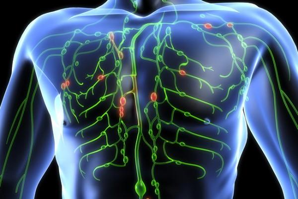 sistemul limfatic joaca un rol deosebit de important in organism