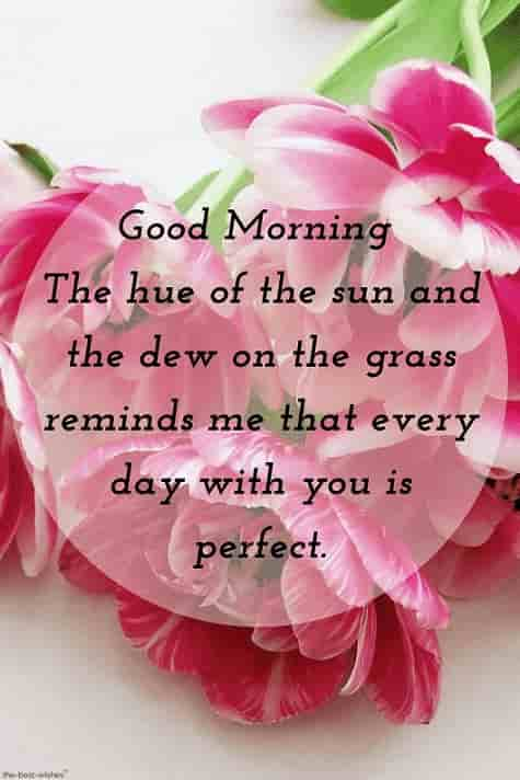 hd morning wishes message for lover with flowers