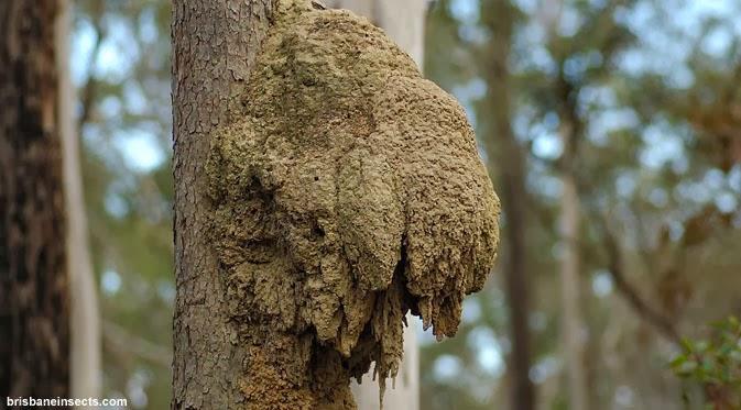 Keajaiban Ciptaan Allah: Ilmuwan Temukan Pohon yang Sedot ...