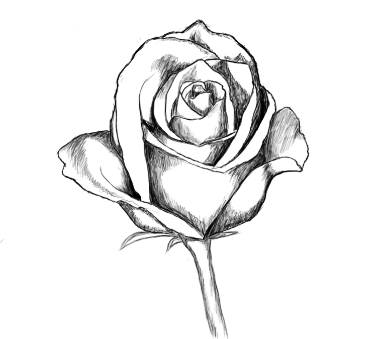 How To Draw A Rose - Draw Central How To Draw A Rose For Mothers Day