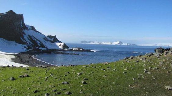 Antarctica Flora