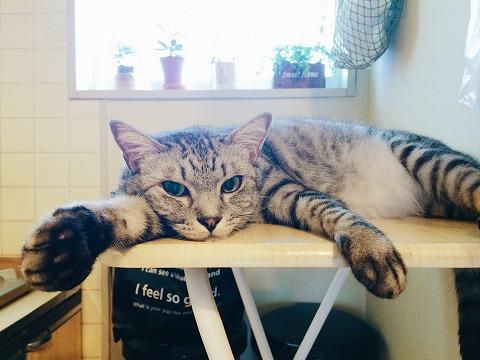 台の上でぺたーんとなってるサバトラ猫