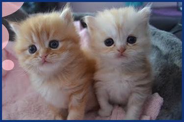 Ein Wurf Katzenbabies