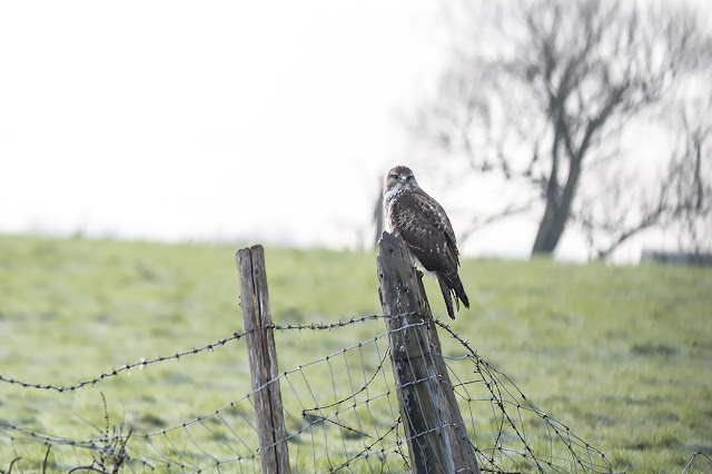 Jan 1st Birding on Sheppy