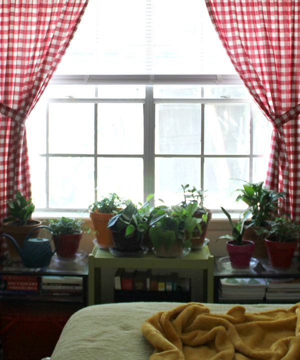 proper humidity for house plants cozy little house