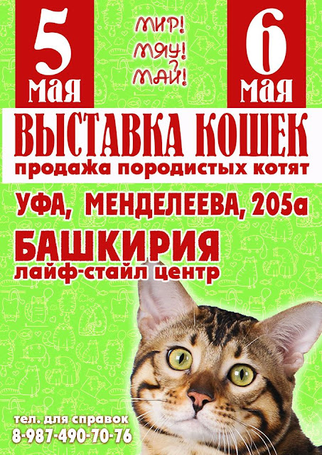 В Уфе пройдет выставка кошек- МИР! МЯУ! МАЙ!
