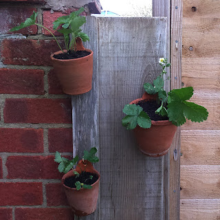 Hanging pots adapted using Terracotta coloured Milliput epoxy putty