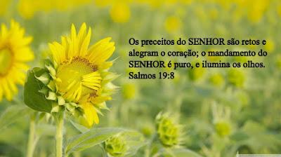 Resultado de imagem para SALMO 19.8