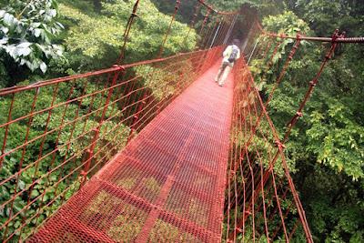 Puente colgante en el Bosque Nuboso de Monteverde