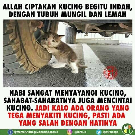 Allah Menciptakan Kucing Begitu Indah dan Imut Seperti Ini!
