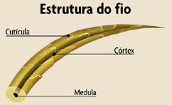 estrutura do fio de cabelo humano