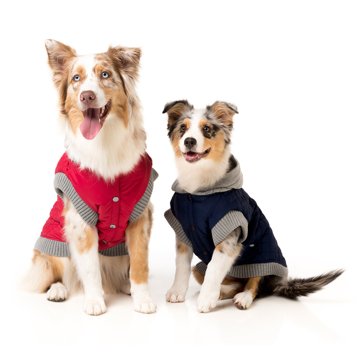 Autumn 2017 Dog Clothes Fashion Trends