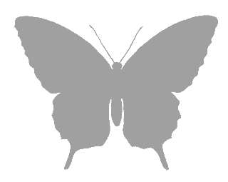 butterfly grayscale image silhouette download