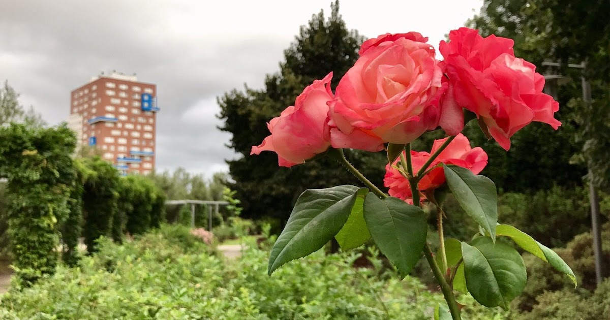 Barakaldo digital agenda el jard n bot nico ampl a su for Jardin botanico tarifas